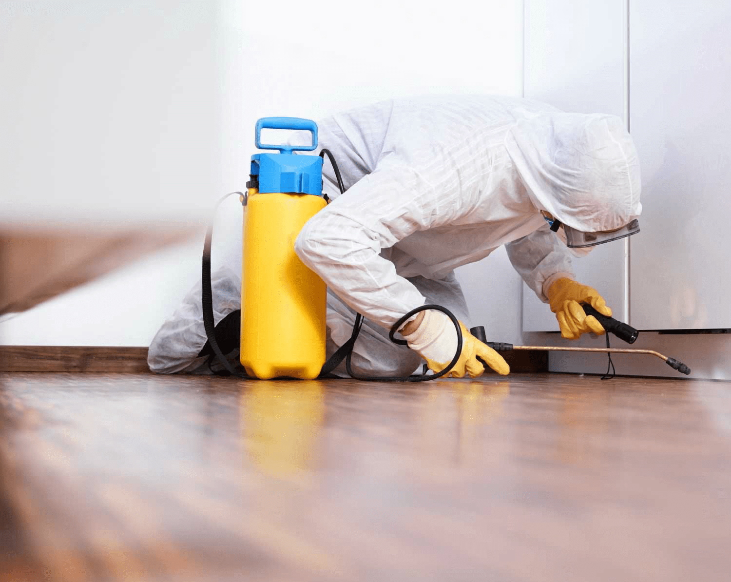 Why You Need Pest Control Service?