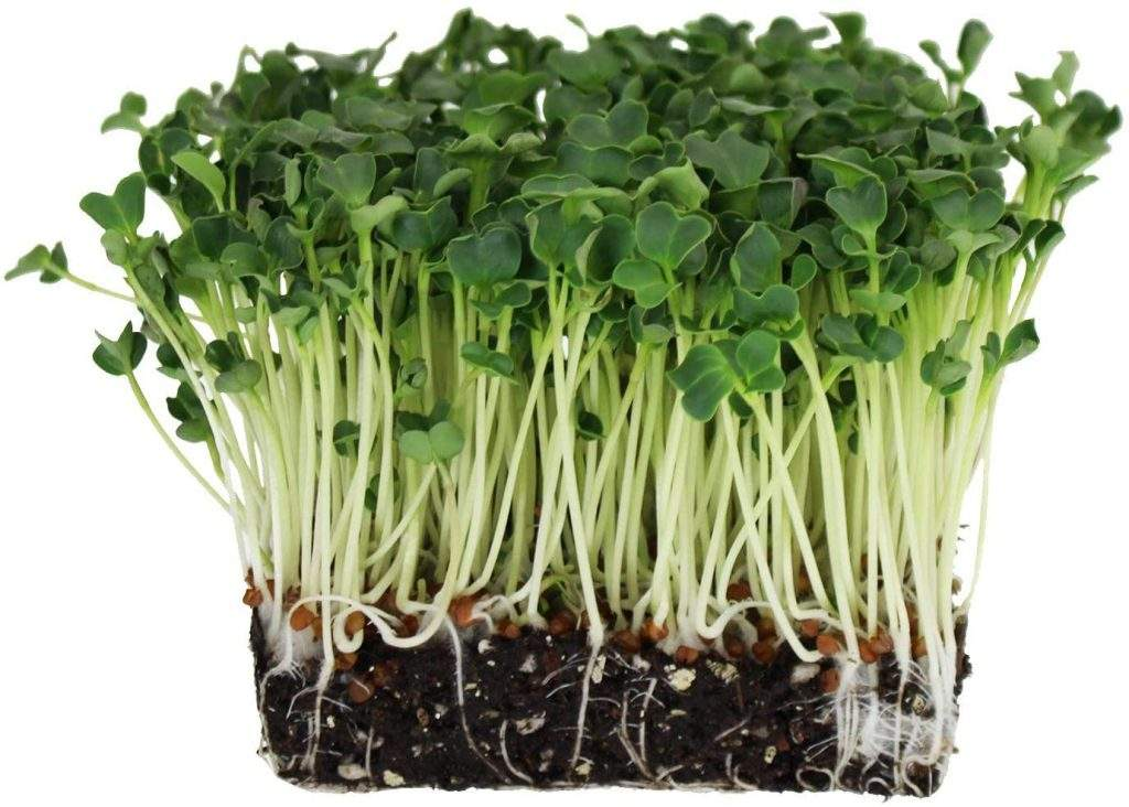 types of sprouts
