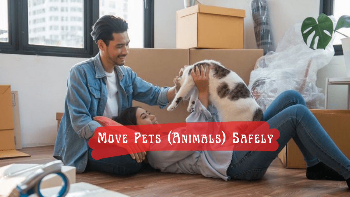 Move Pets (Animals) Safely