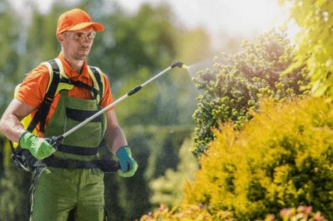 Pest Control Epsom