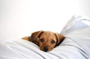 Signs of Neck Pain in Dogs